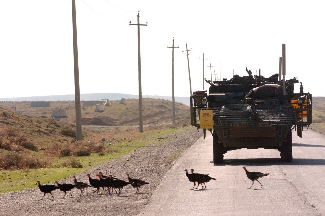 Soldiers from the 3rd Stryker Brigade Combat Team, 2nd Infantry Division stop for a line of turkeys crossing the road in Mosul, Iraq, Nov. 3, not far from the Turkish border where the gobblers may have originated.