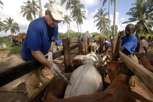Staff Sgt. Scott Ragsdel from Company B, 413th Civil Affairs Battalion, Combined Joint task Force - Horn of Africa, vaccinates a cow during a veterinarian civic action program in Siu Village, Kenya, Dec. 5.