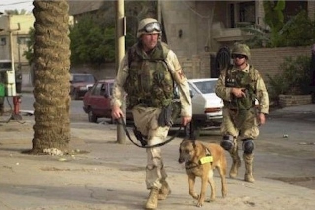 Soldiers from the 527th Military Police Company of Giessen, Germany, use a police dog to search for illegal drugs and weapons during a raid in downtown Baghdad, Iraq, May 19, 2003.