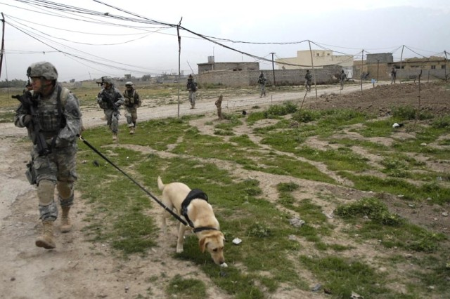 Grek sniffs for IEDs along the road.