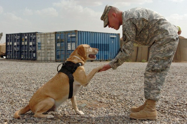 Staff Sgt. Chuck Shuck and his K9 partner, Sgt. 1st Class Gabe, both with 178th Military Police Detachment, 20th Military Police Battalion, congratulate each other for a job well done after a training session at Forward Operating Base Q-West.