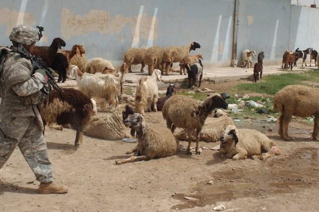 Shepherd Soriano