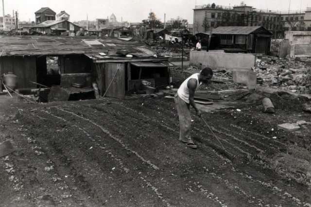 Over the ruin of his home, a Japanese man in Tokyo tends to his flourishing garden. (October 1, 1945)