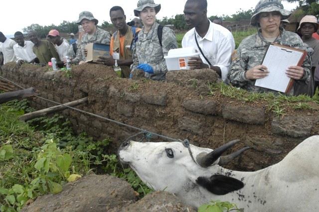 Malian and U.S. Soldiers prepare to inject more than 100 head of cattle with medicine to treat ringworms and other parasites.
