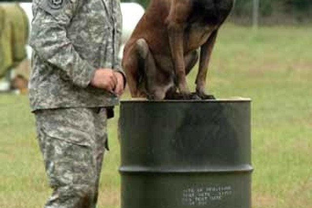 Max sits docilely atop a 55-gallon drum for his handler, Sgt. Kyle Harris of the Fort Belvoir kennel. The 212th MP Detachment dog stood out as the hardest-hitting dog in the MDW Canine Competition and displayed excellent obedience on the patrol dog course where there were distractions at every turn.