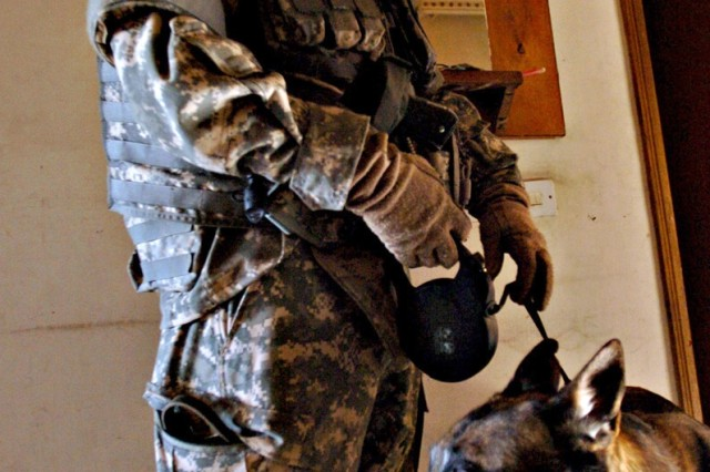 Zasko, a Belgian Malinois, is trained to detect the scents of 11 weapons, from common ammunition to sophisticated explosive materials.