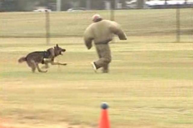 Working Dog Competition