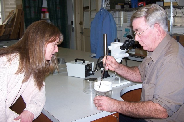 Denice Adams, biological sciences laboratory technician, observes as Tom Harkins, entomologist, removes a black-widow spider's egg case suspended from the spider's web.