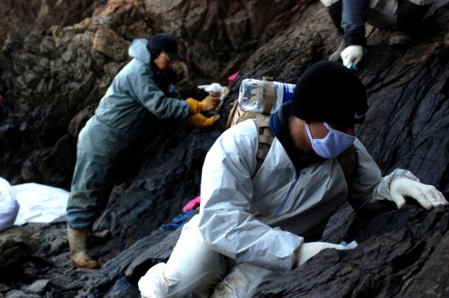 Pvt. Vincent Zoccolillo, Co. E, 1st Bn., 72nd Armor Regt., works along side Korean nationals while cleaning up the oil spill at Mallipo Beach, Taean Jan. 27.