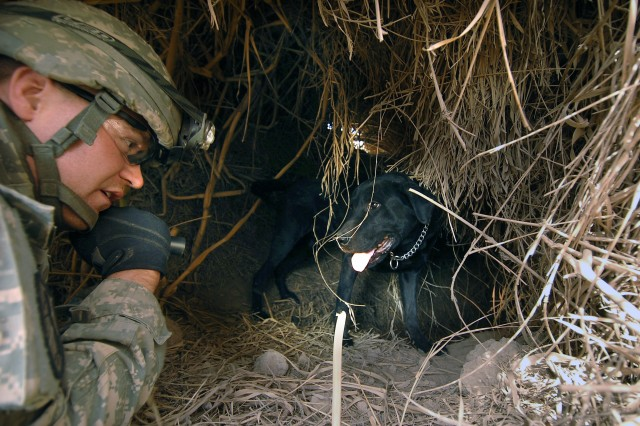 Sgt. Max Free, from the 67th Engineer Detachment, and his military working dog, find a tunnel hidden by reeds during a clearing operation in Kesra, Iraq, Feb. 24, 2008.