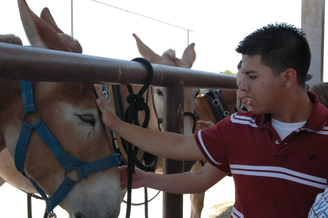Albert Ayala, 17, a junior with the Molina High School Junior Reserve Officers' Training Corps program in Dallas, pets one of the 1st Cavalry Division's mules at the Horse Cavalry stables on Fort Hood, Texas May 30. Ayala along with 39 other Molina High students and their JROTC instructors visited Fort Hood to experience a little taste of Army life.