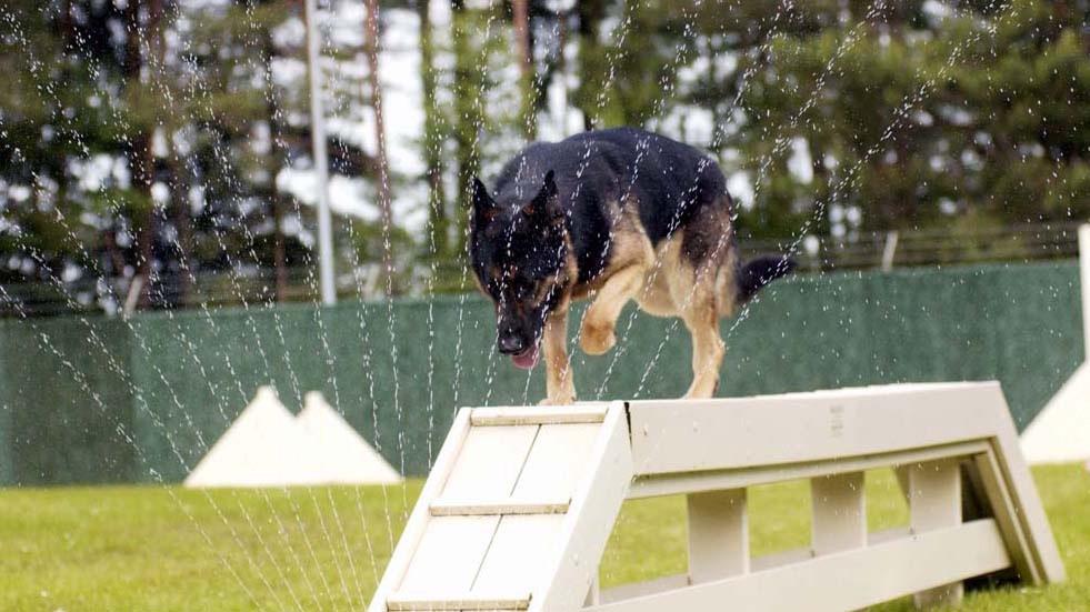 Military Dog Teams Hone War Fighting Skills Article