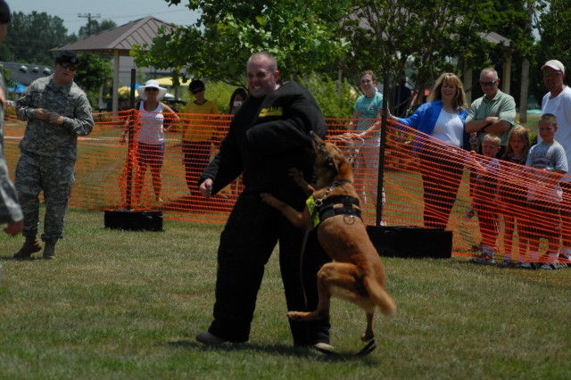Spc. Chris Hallisy, Directorate of Emergency Services, is attacked by military dog Gerta during a K9 demonstration Saturday. During the demonstration Gerta displayed her skills in agility, obedience, detecting explosives and attacking suspects on command.