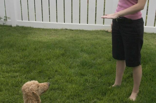 Military ohana open hearts, homes to raise service dogs