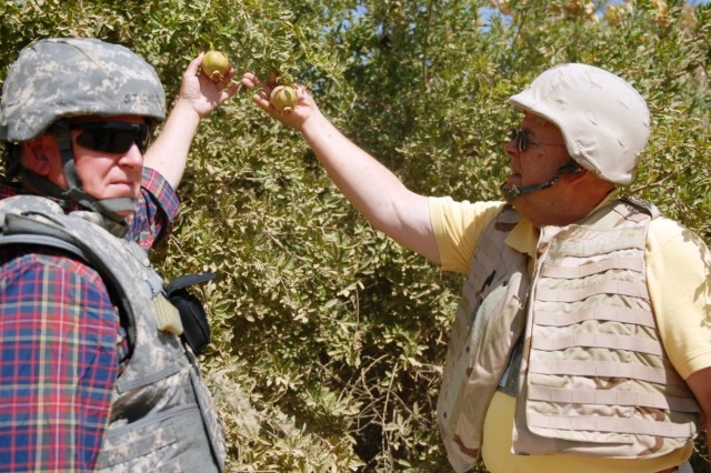 George Stickels, the agriculture adviser with the 4th BCT embedded Provincial Reconstruction Team, and Dr. Glen Shinn, deputy team leader for Team Borlaug, check out some pomegranate during a visit to a citrus farm June 25.