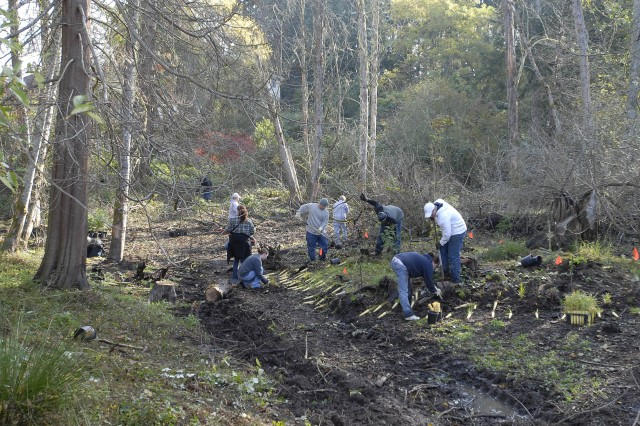 Twenty volunteers from the 42nd Military Police Brigade, helped Oct. 24 to plant hundreds of plants at the Shannon Glenn Wetland Restoration Project in Steilacoom, Wash.