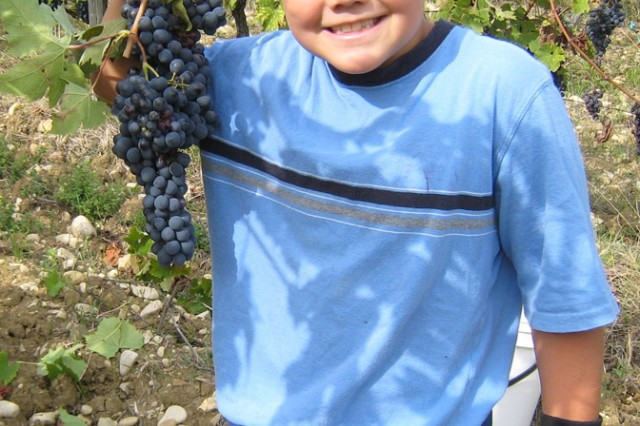 Aaron McGowan, 8, from the elementary school on U.S. Army Garrison Livorno, Italy, shows how to effectively harvest grapes during an off-post volunteer event set up by the installation's chaplain office.
