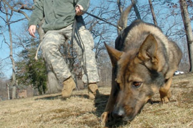 MPs, military working dogs prepare for Inaugural service