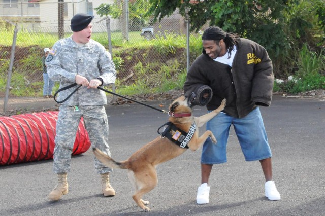 Tennessee Titans Running Back Chris Johnson takes part in a military working dog demonstration by Sgt. Nicholas Briggs, 13th Military Police Detachment, 8th Military Police Brigade special reaction team, Feb. 5 at Schofield Barracks, Hawaii. A group of Pro Bowl players spent a day with Soldiers at Schofield Barracks during Pro Bowl week.