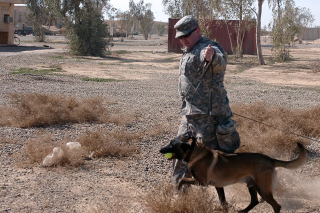 Army Training: For the Dogs