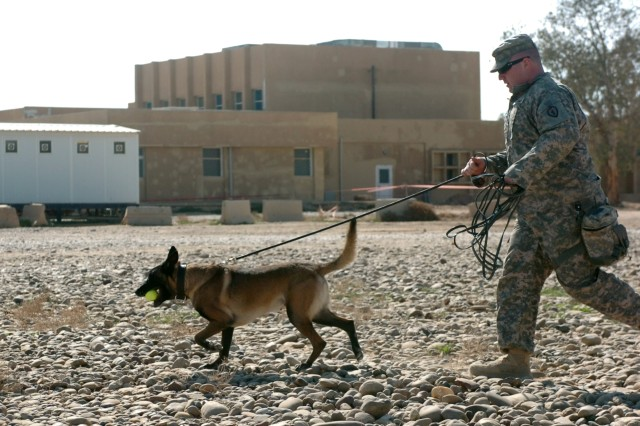"""BodyStaff Sgt. Robert Weddle, a Leesport, Pa. native with the 89th Military Police Brigade, III Corps, and his military working dog, Elmo, successfully return after a """"search"""" demonstration, at Contingency Operating Base Speicher , near Tikrit, Iraq, Feb. 12. Military searching dogs utilize their keen senses of smell to locate and identify many locations of possible interest to servicemembers in the field, such as improvised explosive devices, and weapon caches. (U.S. Army photo by Pfc. Jesus J. Aranda, Task Force Lightning Public Affairs)"""