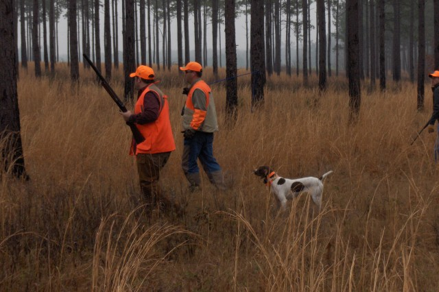 "Two shooters and their guide approach a covey of quail after the lead dog goes point in the ""Purple Heart Outdoors Tour"" Bobwhite Quail Hunt in Georgia earlier this month."