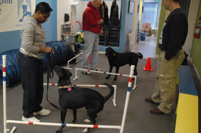 Wounded Soldiers, shelter dogs help each other