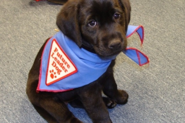 The U.S. Army Garrison - Detroit Arsenal Child Development Center has an exciting opportunity to raise a puppy for a year supporting the Leader Dogs for the Blind program.  The puppy's name is Camie, and the goal is to raise her so that she will eventually become a service dog for a visually impaired person.