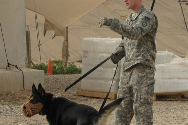 Staff Sgt. Conan Thomas trains his Military Working Dog, Sgt. 1st Class Britt at FOB Bernstein April 8.  When he receives cues from Thomas, Britt takes off toward his target, ready to intimidate any threat into submission.