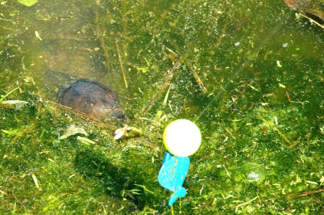 A turtle didn't get the memo that the kids were looking for fish and took a nip at a hook.