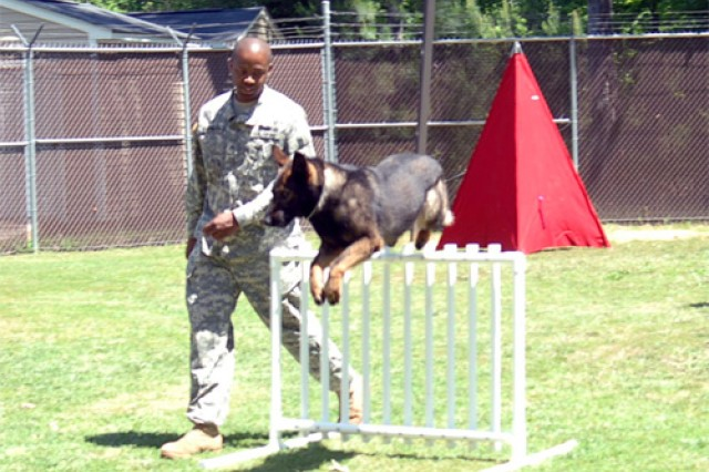 Staff Sgt. Joshua Washington, 221st Miitary Police Detachment, 8th Transportation Brigade, puts Military Working Dog Clara through her paces in the training yard at the Fort Eustis MWD kennel. Three of the unit's MWD teams traveled to Fort Leonard Wood in Missouri for the Training and Doctrine Command's Third Annual Military Working Dog Warrior Police Challenge, May 10 through 15. The teams competed in 11 events against 43 other teams across the armed forces. Washington and Clara took first place in the Endurance Challenge and teammate Staff Sgt. Allen Chrans and MWD Jings came in third place for the timed Open Area Scouting event. Sgt. Brandon Beene and MWD Chay also competed in every competition. Although Beene and Chay did not place in the top three slots for each event, their consistent level of excellence went toward the team bringing home the Top Kennel award.