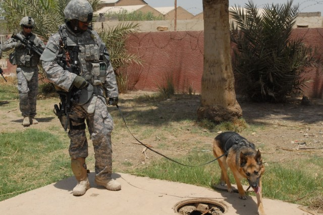 BAGHDAD - A U.S. military working dog and handler move through a courtyard in Abu Ghraib, May 19, with Pennsylvania National Guard Soldiers from Company B, 2nd Battalion, 112th Infantry Regiment, 56th Stryker Brigade Combat Team. The 2-112th, headquartered in Lewistown, Pa., is attached to the 2nd Brigade Combat Team, 1st Cavalry Division.