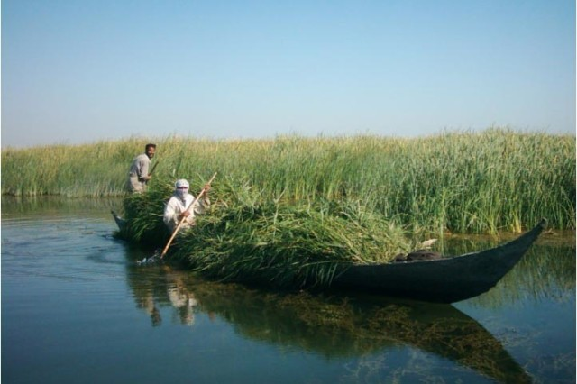 Members of the Marsh Arab tribe traverse the marshes of southern Iraq. Once twice the size of the Florida Everglades, the marshes are now a fraction of their former size after their drainage by Saddam Hussein. Human Terrain System anthropologists advocate restoring the marshes.