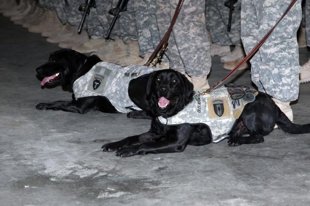 Vet Dogs