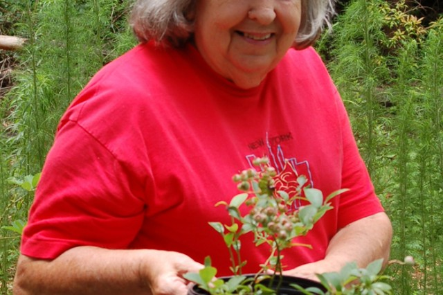 Anne Story shows one of the blueberry plants she rooted from a cutting.  The master gardener advises gardeners to cut a 6-inch branch, strip all the leaves except the top two, dip the cutting in a root hormone and stick it in a mixture  of one-third vermiculite, one-third soil and one-third sphagnum moss.  Before planting the new bush, strip off any berries in order to have berries during the next growing season.""