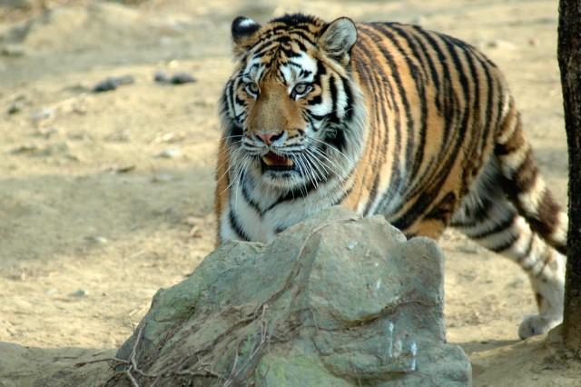 e animal kingdom at Seoul Zoo