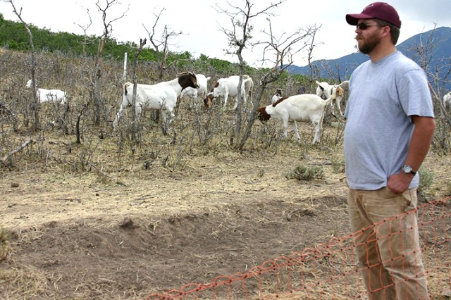 Utah Guard Enlists Help From 'A Few Good Goats'