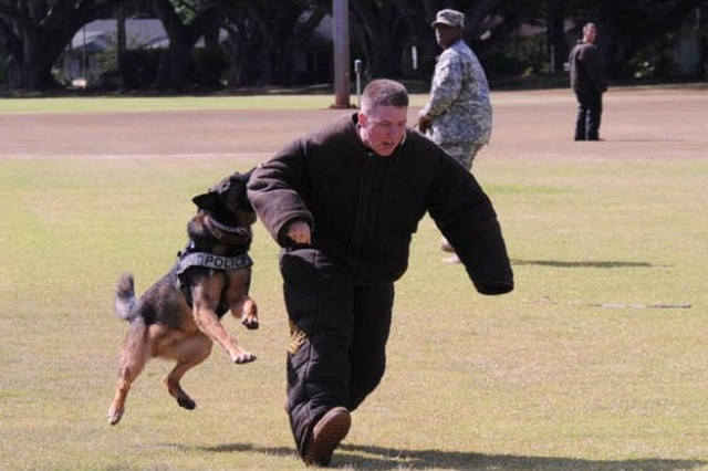 Mandy, a K-9 working dog with the 13th Military Police Detachment, 728th Military Police Battalion, Schofield Barracks, Hawaii, takes down an assailant during the 2009 Hawaiian Islands Working Dog Competition, Sept. 8 - 11.
