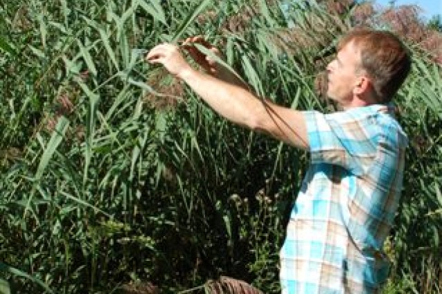 Hans Verwasch, USAG Schinnen's Environmental Division Chief, inspects one of the varieties of tall grass found around the Schinnen Pond.