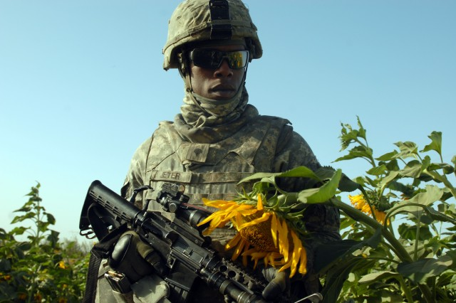 """TAJI, Iraq - Spc. Marcus Jeter, of Atlanta, walks through a sunflower field near Taji, Oct. 5, during a joint patrol with the Iraqi Army. Jeter, an artilleryman assigned to Company A, 1st Battalion, 82nd Field Artillery Regiment, 1st Brigade Combat Team, 1st Cavalry Division, searches for weapon caches and other suspicious activity. """"You get more in-depth and meet a lot of people, see different cultures and see a lot of kids,"""" said Jeter. """"Plus, I get to do a different job because basically [artilleryman] usually sit on the [forward operating base]."""""""