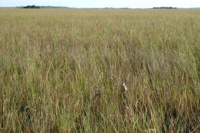 Freshwater prairie in Everglades National Park