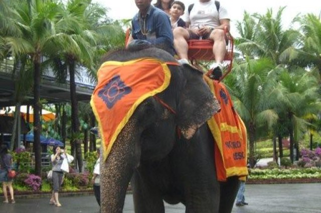 FMWR tourists to Thailand took elephant rides during the trip. They also attended an elephant show where elephants performed tricks and the tourists could feed them bananas.