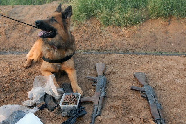 BAGHDAD-Palli, a military working dog supporting 1st Brigade Combat Team, 1st Cavalry Division, sits beside the weapons and ammo he found during a combined cordon and knock conducted in Tarmiyah, on the northeastern side of Baghdad, Nov. 11.