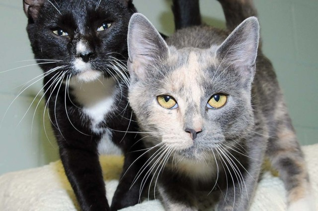 Friendly cats like Rocco, left, and Lady have only one wish this year - to find homes for the holidays.