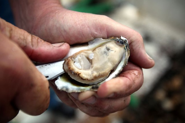 The Army Corps of Engineers, Norfolk District, has been involved with native oyster restoration in the Chesapeake Bay since 1999.