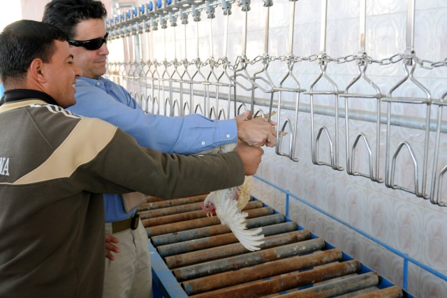 BAGHDAD - Juan Alsace, team leader of the embedded Provincial Reconstruction Team, which is a subsection to the United States Department of Agriculture, attaches the first chicken to go through the newly reopened Al Kanz Poultry Processing Plant. The plant was closed down in 2004 due to a lack of poultry producers and the poor condition of its facility. (U.S. Army photo by Spc. Daniel Schneider, 366 MPAD, USD---C PAO)