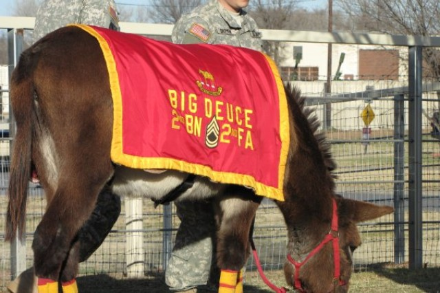 Big Deuce, mascot of Fort Sill's 2-2nd Field Artillery Battalion, was promoted to sergeant first class in a ceremony at his corral Jan. 25. Just last year, Fort Sill was rocked by rumors that the donkey was in ill health, but a new diet and P.T. program has got Big Deuce kicking up his heels again.