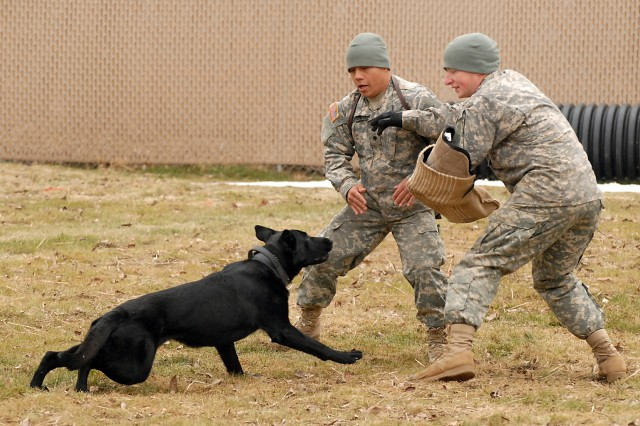 TRADOCAca,!E+working dogs gather for certification