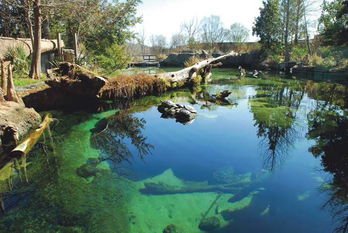 Under The Sea Explore The Flint Riverquarium Article The United States Army