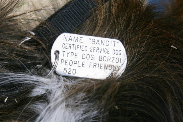 Ken Costich's service dog, Bandit, wears his dog tag proudly. After a month of living with Costich, Bandit has woken him up from nightmares and been able to alert him when he is about to have a panic attack.